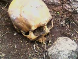 Ossada humana é encontrada ao lado do IML em Porto Velho