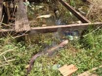 Moradores mataram peixes elétricos que surgiram com a maré do Madeira no bairro Nacional, em Porto Velho