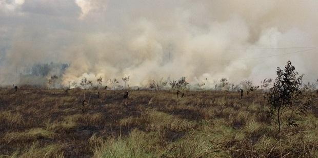 Incêndio destrói área de pastagem próximo de casas, em Vilhena, RO
