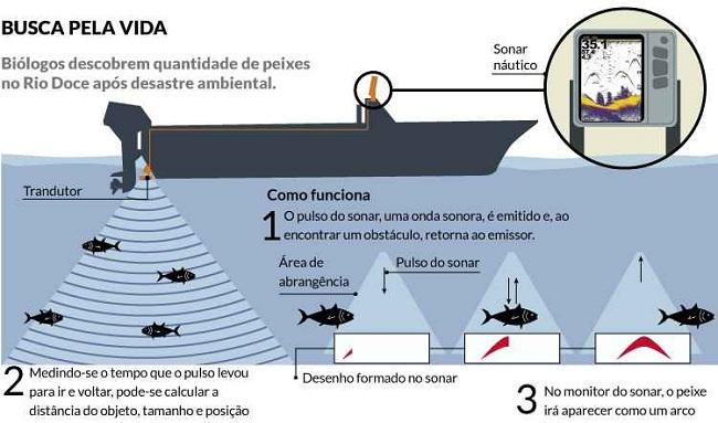 Biólogos encontram cardumes em rio poluído pela lama da Samarco