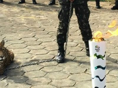 Cigs recebeu o tour da tocha na manhã de segunda (20); onças participaram do evento