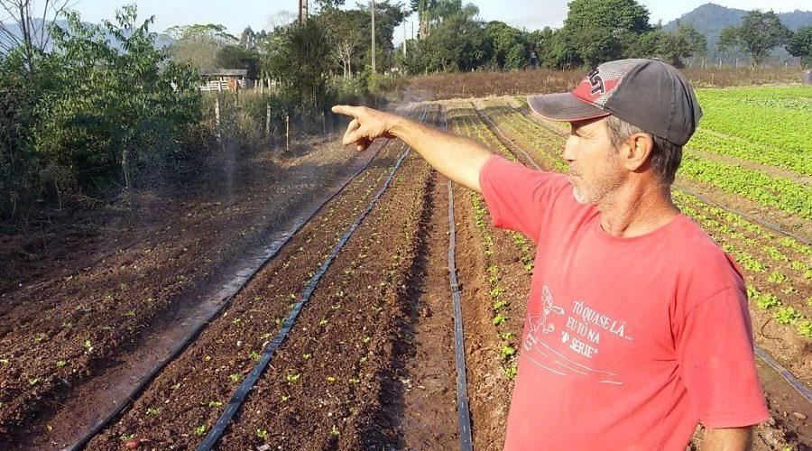 Bandidos furtam plantações de batata e morango de produtores rurais