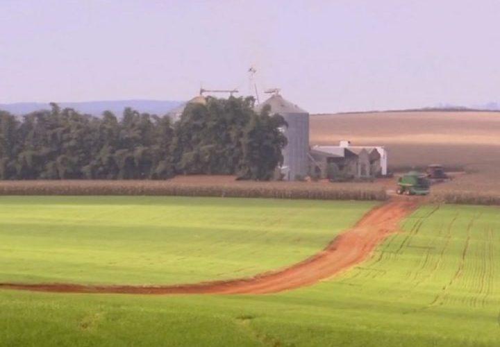 Produtores dizem que clima e falta de sementes prejudicam plantio de feijão