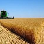 Agronegócio precisa ser menos dependente do Estado, diz Roberto Rodrigues