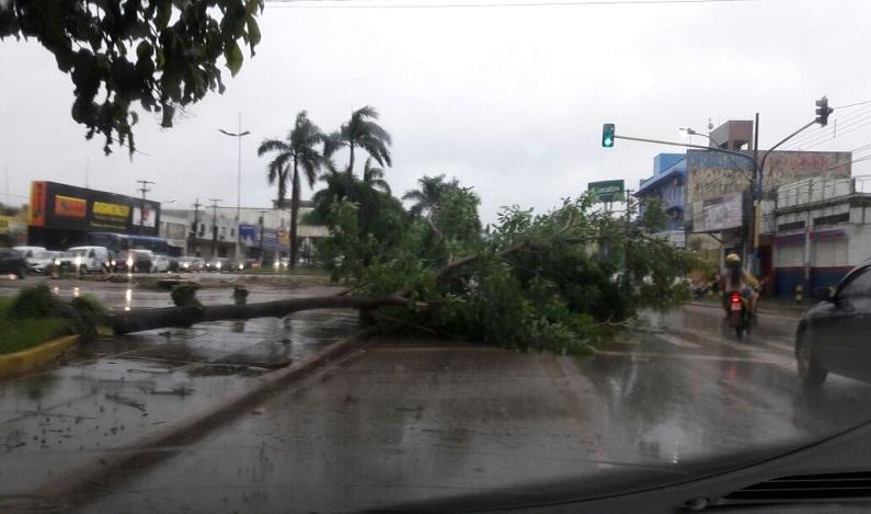 Chuva causa destruição e árvore quase atinge motociclista