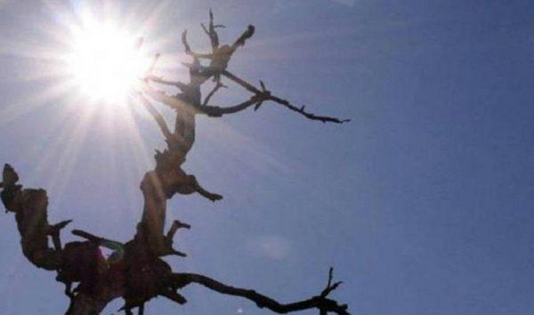 Pesquisadores preveem agravamento da seca no Nordeste