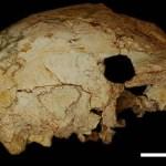 Cientistas localizam crânio humano de 400 mil anos em Portugal