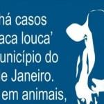 Após boatos, autoridades de saúde negam 'vaca louca' em Niterói