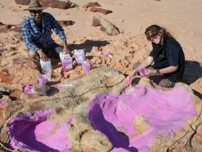 Grupo encontra 150 pegadas de dinossauros