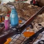 Gerente de fazenda é preso em MT por matar onças em terra indígena