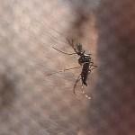 Impacto de longo prazo do zika no País pode chegar a R$ 36 bi