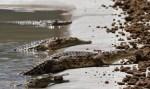 Pastor tenta imitar Jesus e acaba devorado por crocodilos no Zimbábue
