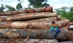 Congresso abre portas para ampliar desmatamento na Amazônia