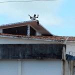 Pressionado na ONU, Brasil declara que reduzirá população carcerária em 10%