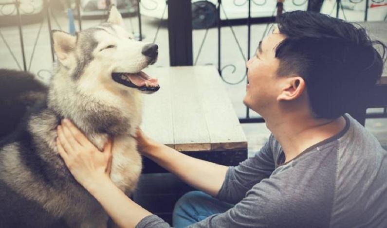 Olfato humano é tão bom quanto o dos cães, mostra estudo