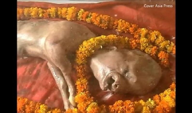 Bezerro nasce com traços humanos e atrai fiéis após ganhar fama de deus hindu