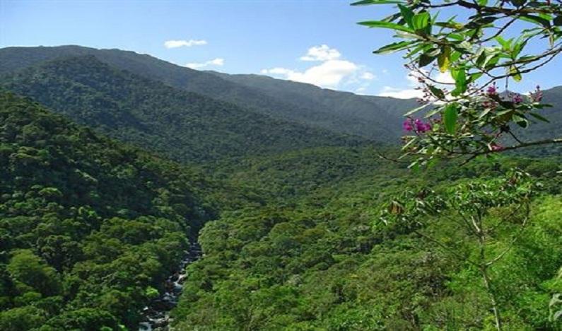 Para poupar Temer, Maia deve apresentar lei para reduzir floresta no Pará