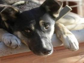 Projeto quer liberar animais em hospitais de SP para visitar pacientes