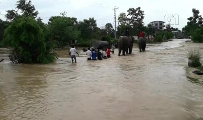 Elefantes ajudam a resgatar centenas de turistas em parque alagado no Nepal