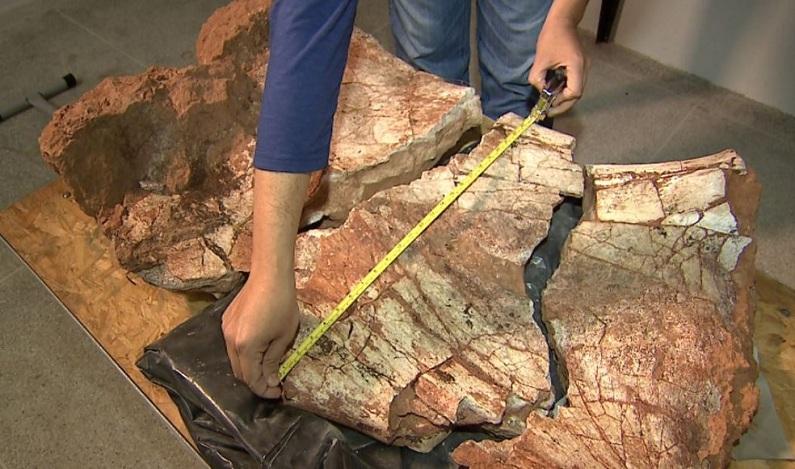 Ciclista acha fóssil de dinossauro durante trilha no interior de SP