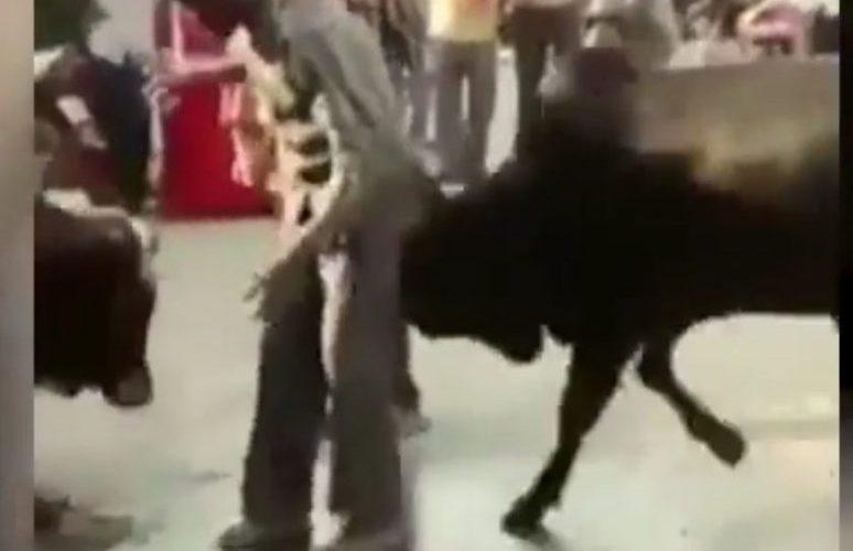 Bêbado entra em briga de bois e o resultado é doloroso; veja vídeo