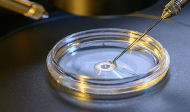Pela 1ª vez, cientistas removem doença genética com 'cirurgia química' de embrião