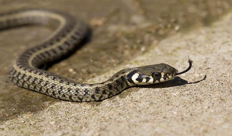 Cobra de 1,5 metro é capturada em playground de creche