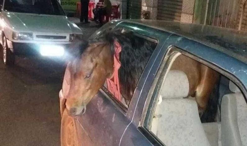 Embriagado, homem é preso após levar pônei para dar volta de carro