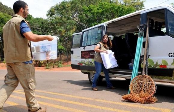 Zoo envia equipe à Chapada para tratar animais feridos em incêndio