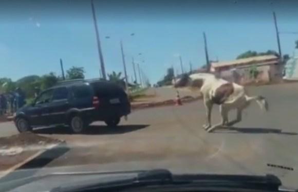 Polícia apura vídeo de cavalo sendo puxado por carro em Luziânia