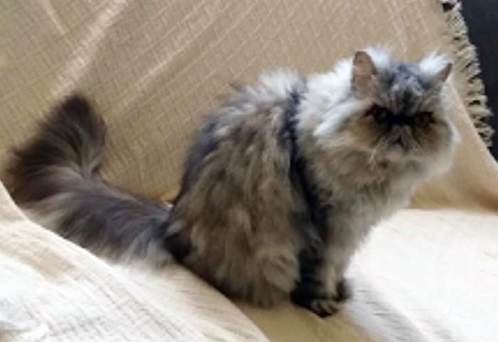 Justiça Federal na PB leiloa gata por R$ 1 mil; animal não foi arrematado