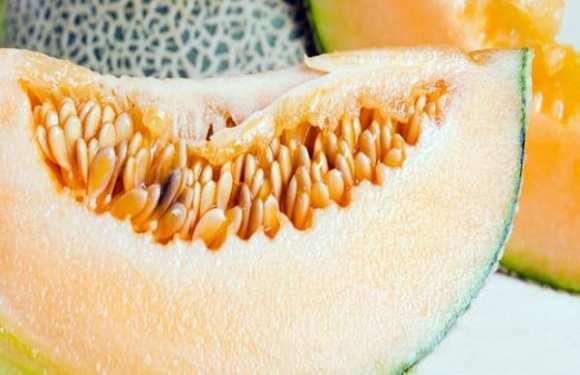 O que é a listeria, bactéria que matou 3 pessoas que comeram melão infectado na Austrália