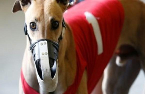 Lei quase centenária permite as decadentes corridas de cães na Flórida