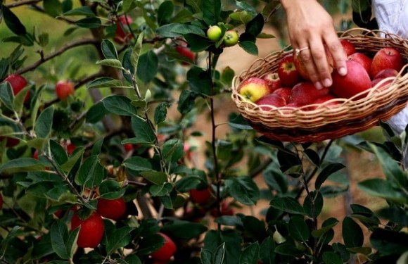 Sancionada com veto lei que regulamenta produção de polpa e suco de frutas