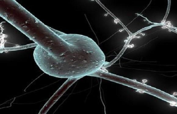 Novo medicamento impede a morte de neurônios depois de um AVC