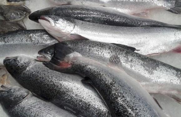 Após frango, União Europeia suspende importação de pescado do Brasil