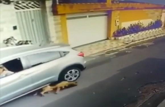 Polícia procura enfermeira suspeita de atropelar cachorros em São Luís; vídeo repercute nas redes sociais
