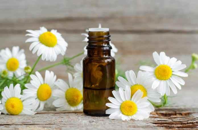 Chamomileessential oil for eczema
