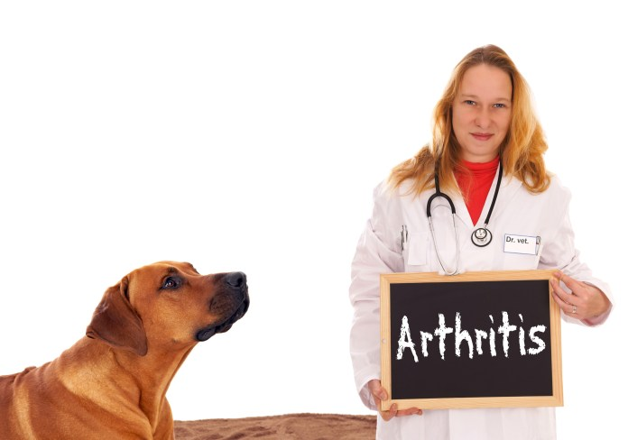 Dogs with arthritis