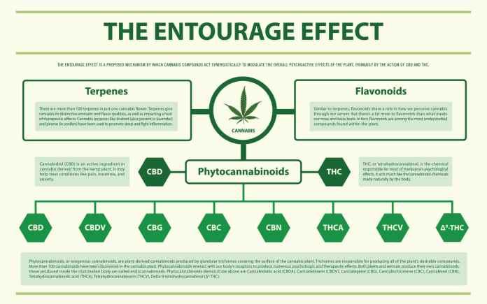 entourage effect: cbd and thc