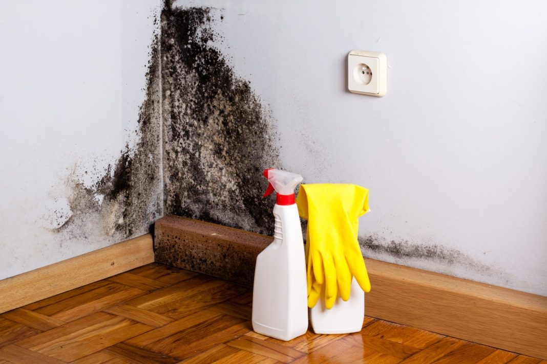 how to spot black mold cleaning supplies