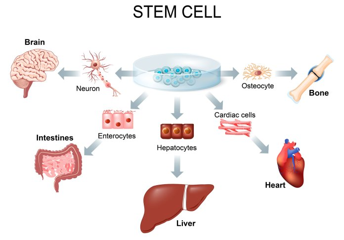 Other types of stem cell treatment