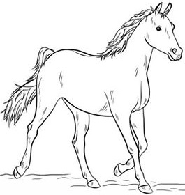 تعليم الرسم للاطفال رسم حصان خطوة بخطوة