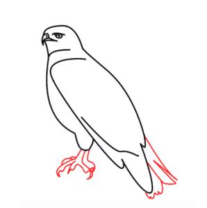 رسم صقر للأطفال المبتدئين