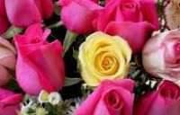 صور الورد الطبيعي