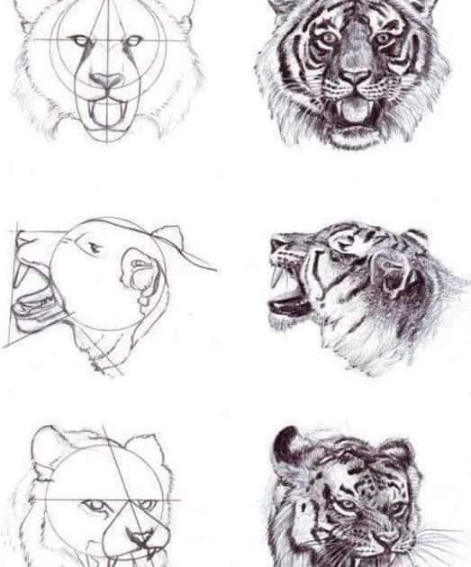 تعليم رسم الحيوانات بالرصاص خطوة بخطوة
