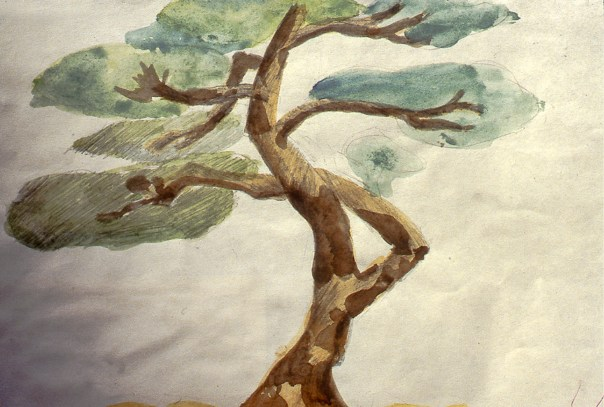 Image of Chinese Ming tree