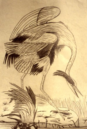 Drawing showing a crane drinking from a river