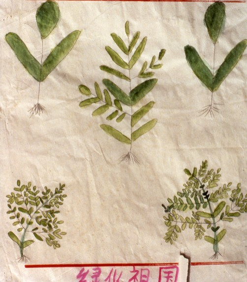 Simple drawing of small plants showing their roots - a botanical study