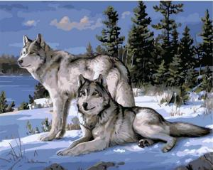 Two white wolves in the snow